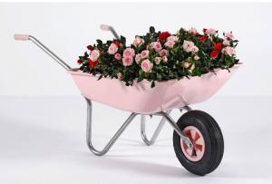 Rosa2_blom