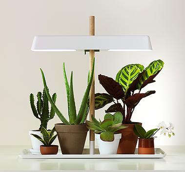 plant_lamp_01_